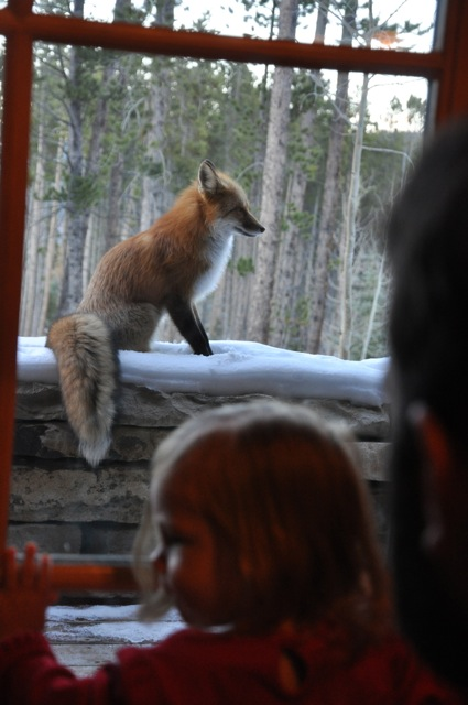 L.L. thought the fox was pretty cool. She didn't even scare the poor thing away with her shriek and run for the door.
