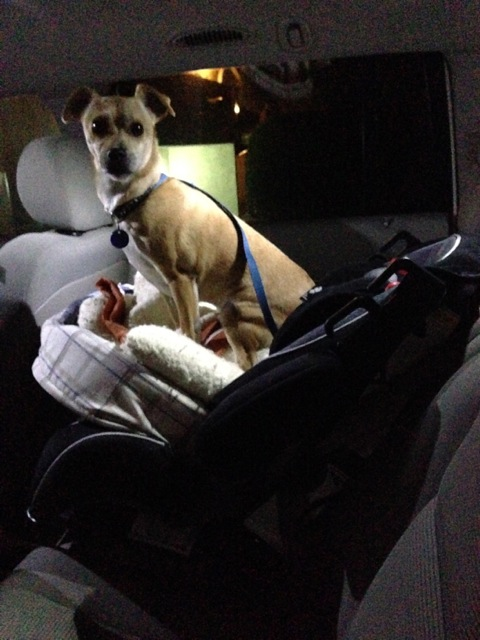 Domingo takes over the car seat on his way over to Dani's. Why wouldn't he?